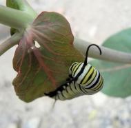 caterpillar_zps1qayluaw