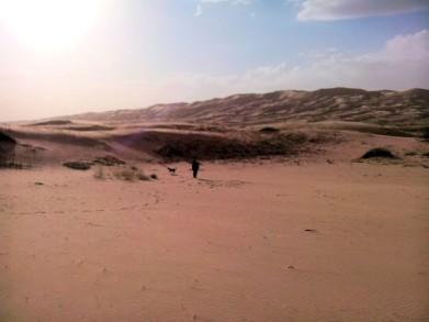 dunes (Medium)