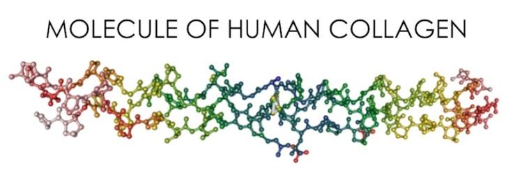 human-collagen-molecule