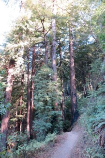 At first the trail is forested.