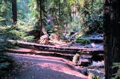 Campsites at Terrance Creek