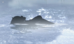 An alluring shape in the fog shrouded water.