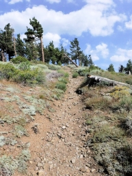 Some of this trail section is pretty ragged