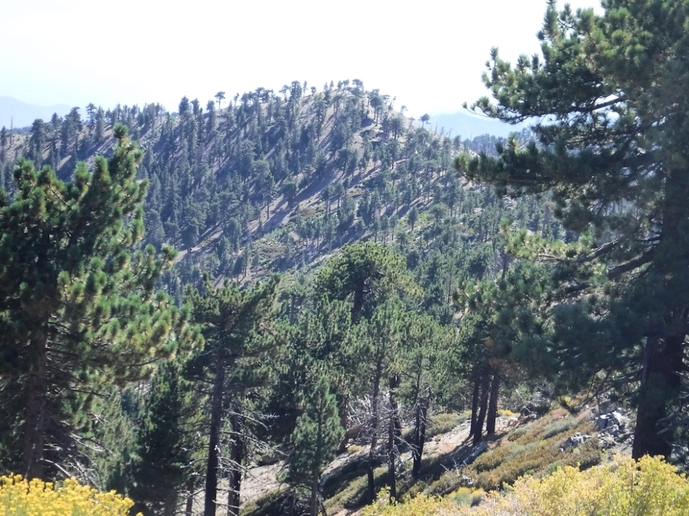 Towards Mt. Hawkins, SW.