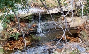 Sespe Alder Creek 01-05-09 (14)
