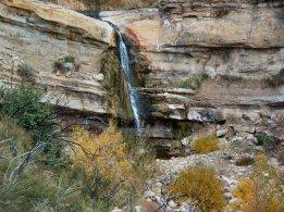 Sespe Alder Creek 01-05-09 (16)