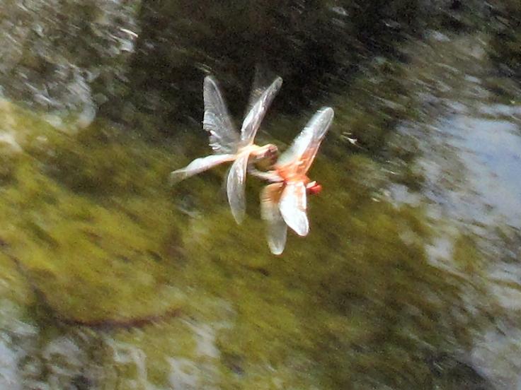 2Dragonflies