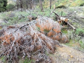 Fallen tree across trail