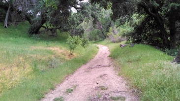 This was once Saugus to the Sea Road, a truck trail thru the ranches and over the hill to the San Fernando Vally. Occasionally you'll see smal bits of asphalt. This road was once paved.