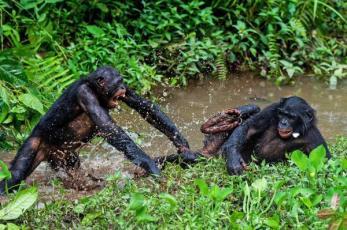 jerk-bonobos-1