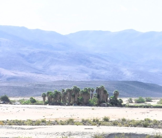 An oasis of green palms in the middle of an island of chalky deposits in a desert valley.
