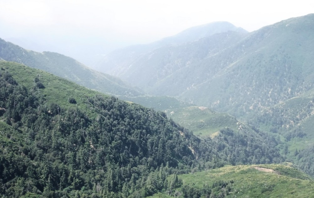Bradford Ridge Path (10)