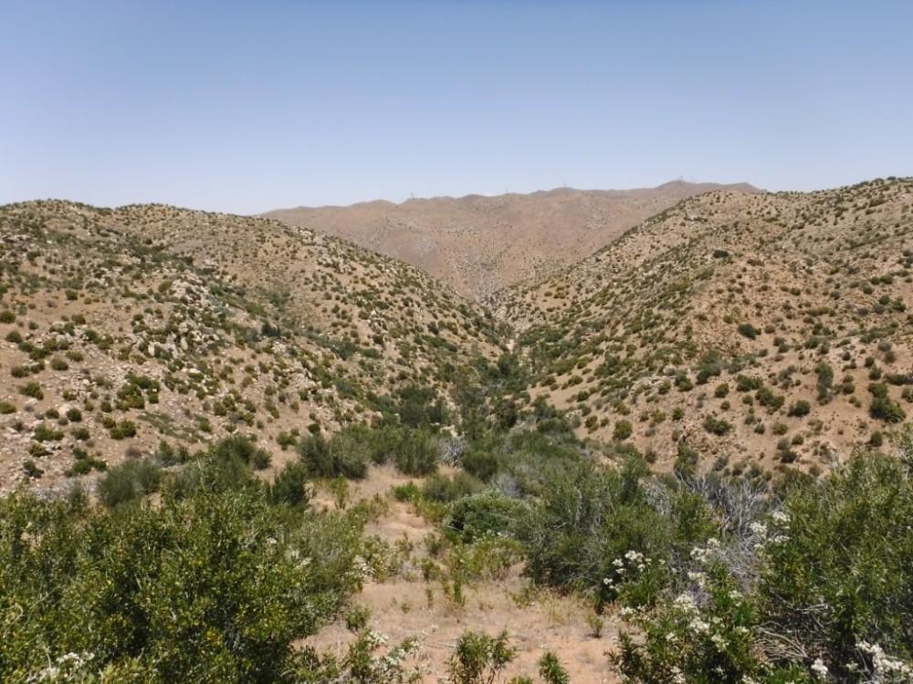 Bradford Ridge Path (19)